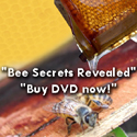 Buy Bee Course DVD now