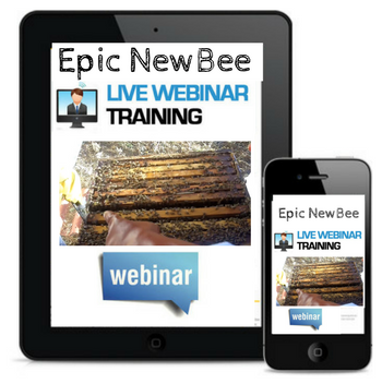 Epic New Bee Webinar training videos